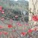 San Quirico D'Orcia, Rose Garden